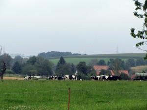 20140730 schoenberg