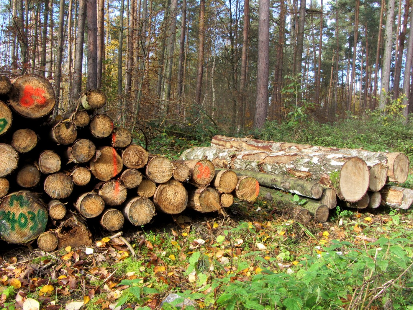 Holzverkauf Ines Springer Mdl